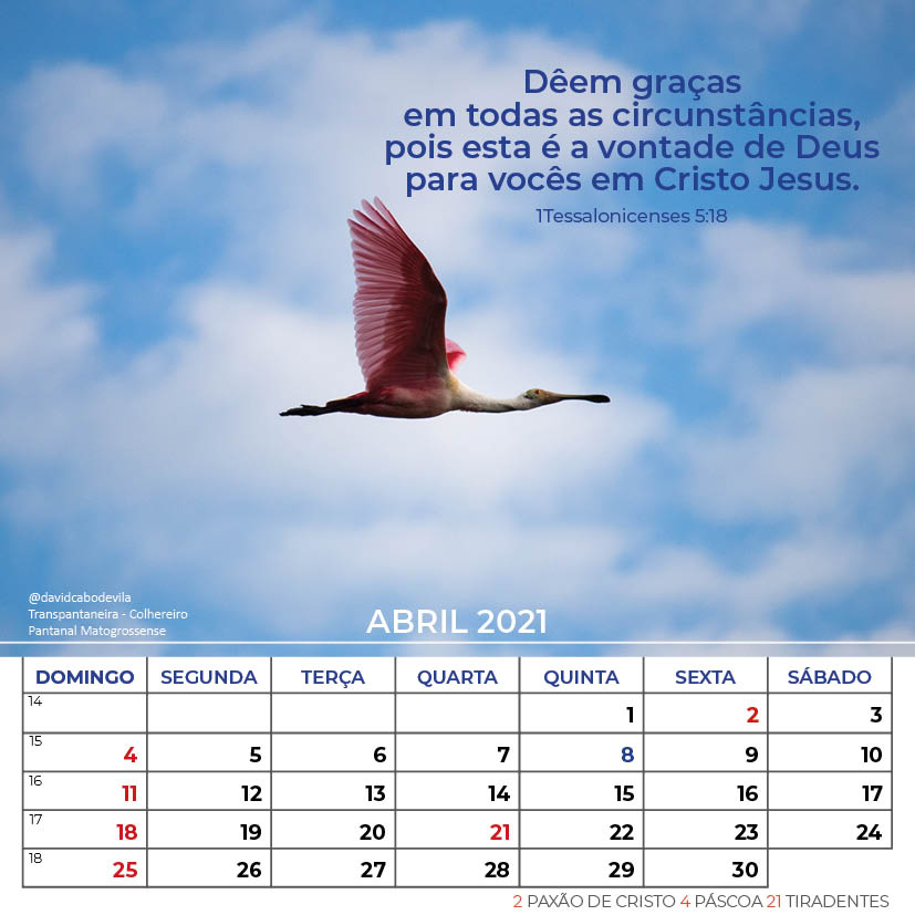 https://www.aaguaviva.com/wp-content/uploads/2020/08/Calendario-2021-ICE-Vida-Nova-Site-AAV12.jpg
