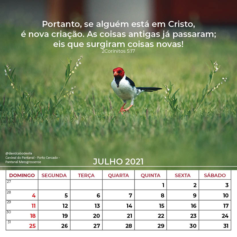 https://www.aaguaviva.com/wp-content/uploads/2020/08/Calendario-2021-ICE-Vida-Nova-Site-AAV18.jpg