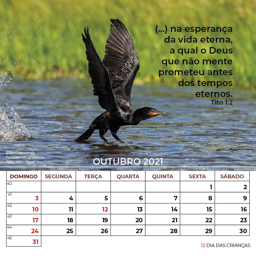 https://www.aaguaviva.com/wp-content/uploads/2020/08/Calendario-2021-ICE-Vida-Nova-Site-AAV24.jpg