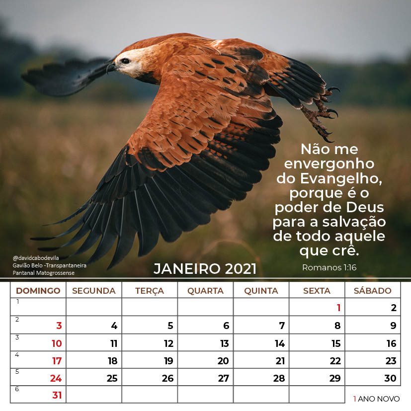https://www.aaguaviva.com/wp-content/uploads/2020/08/Calendario-2021-ICE-Vida-Nova-Site-AAV6.jpg